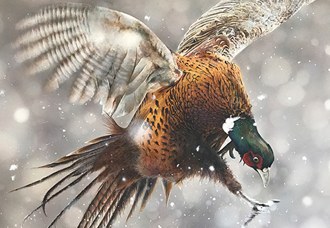 Pheasant Fight Detailed